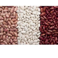 High Quality Pinto Beans Fresh Good Quality Light Speckled Kidney Beans