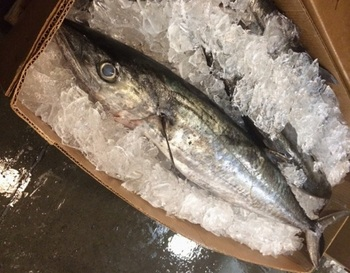 Wholesale Frozen Mackerel Fish In Austria