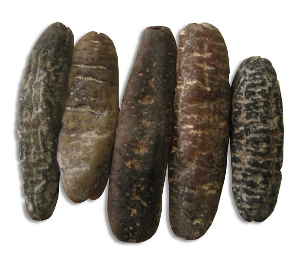 Wholesale dried sea cucumber buyers in China, Grade A dry sea cucumber.....