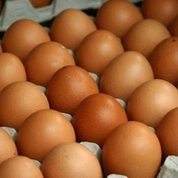 High Quality Fresh White Eggs for Sale