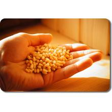 Pine nut kernels, new crop (crop year 2017), vacuum pack