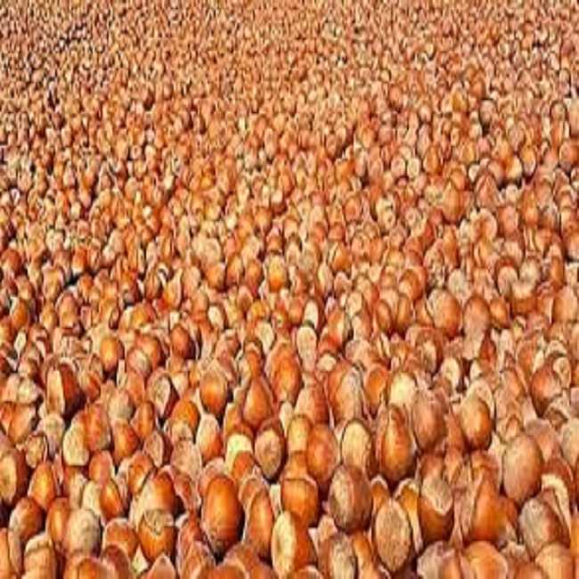 turkish hazelnut raw hazelnuts in shell /raw/roasted, natural high quality for sale organic,halal, best price
