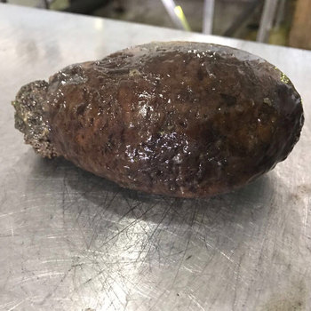 Natural Frozen Sea Cucumber from Russia
