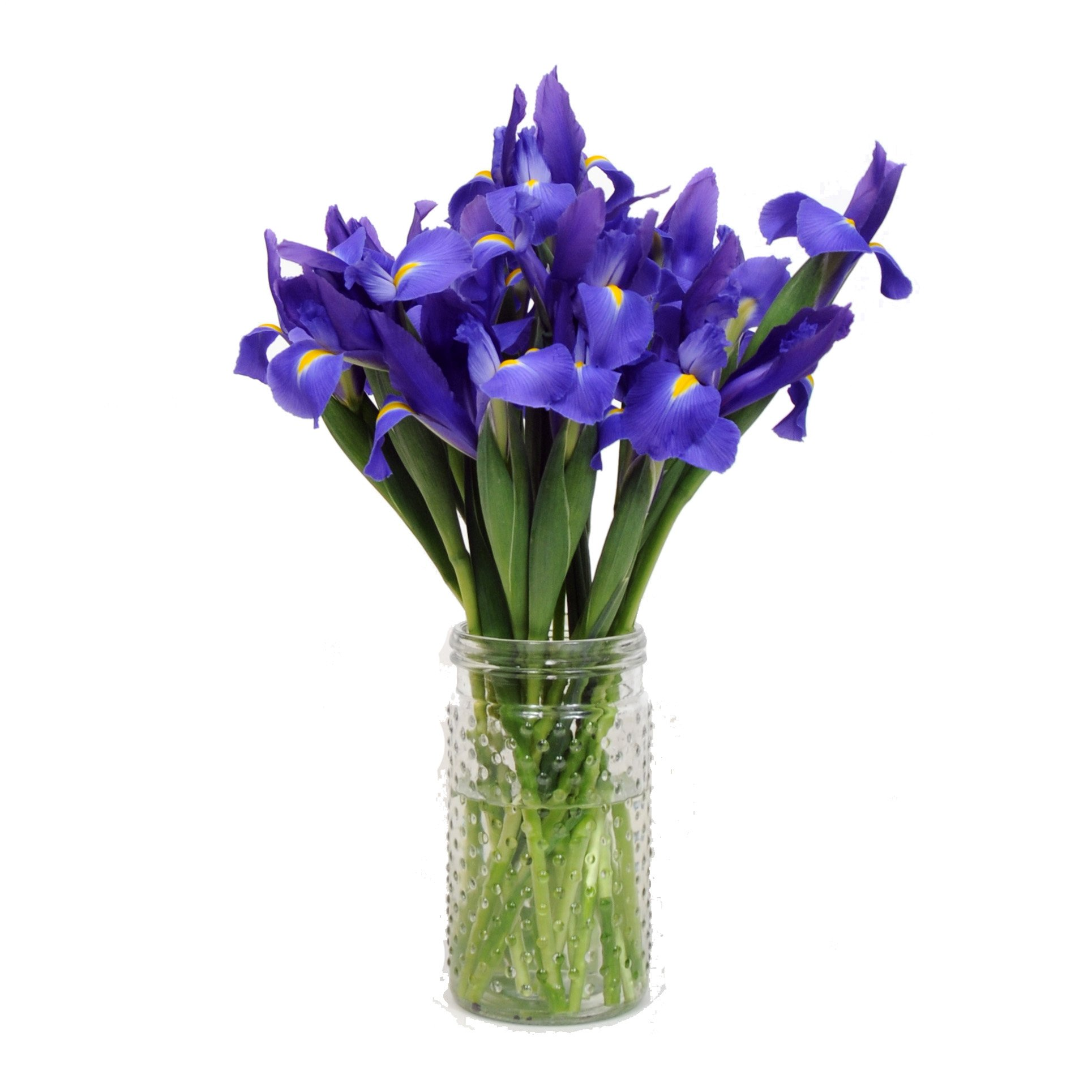 Cheap flowers for get well soon find flowers for get well soon get quotations stargazer barn blue telstar iris with vase sympathy flowers get well soon izmirmasajfo
