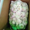 /product-detail/fresh-garlic-egypt-crop-2019-all-sizes-white-garlic-grade-a-cheap-price-62009579164.html