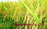 WHITE RICE LONG GRAIN 15% BROKEN Best offer from Vietnam