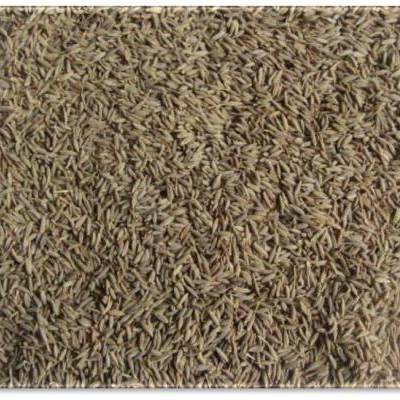 Brazil Cumin Seeds 99 Pure Cumin Seeds Cumin Seeds And Fennel