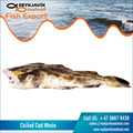 Best Selling Chilled Cod Whole at Low Price