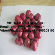 VIET SHALLOT - RED ONION