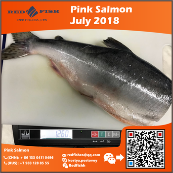 Pink Salmon 5 containers in stock availabe 2018 July Sakhalin russian fish