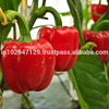 Bulk Organic Plant Growth Fertilizer for growing Hot Peppers