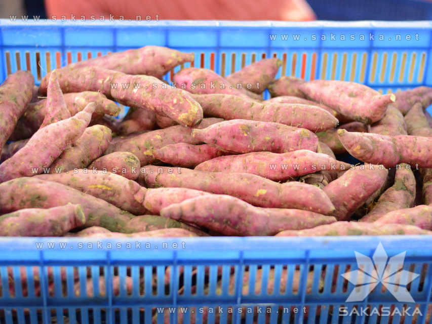 Japanese Sweet Potato High Quality from Vietnam