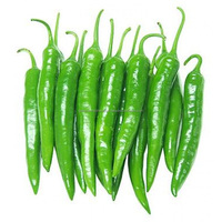 TOP PRODUCT FOR EXPORT: GREEN HOT CHILLI - BEST PRICE