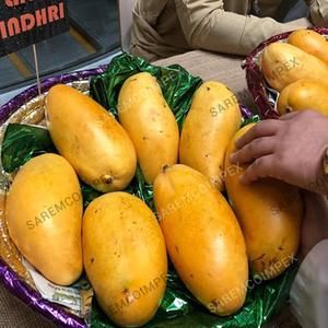 Mango Export From Pakistan, Mango Export From Pakistan