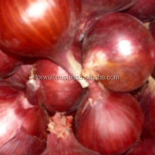 price for big fresh red onions