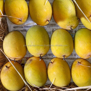 Fresh Alphonso Mango Export In India To Japan/ France/qatar/ Germany /  Europe Countries - Buy Best Indian Exporters Of Fresh Mango,3 Kg Carton Of