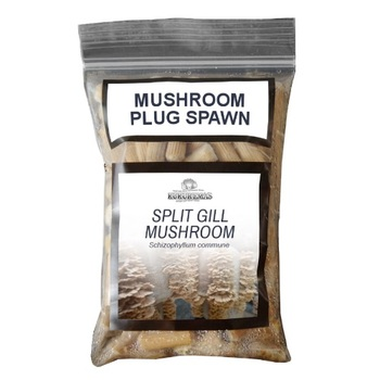 Fresh Shiitake Mushroom Spawn Bags - Buy Shiitake Mushroom Spawn,Mushroom  Spawn,Mushroom Spawn Bags Product on Alibaba com