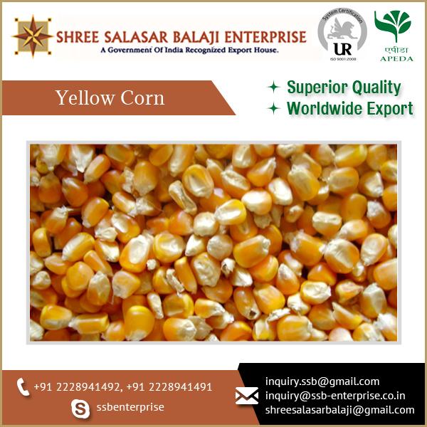 Yellow Maize Chicken Feed Pricesanimal And Bird Feed Yellow Corn