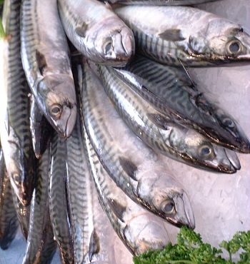 High Quality Sea Food Available For Sale