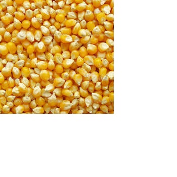 Yellow Corn Gluten Meal 65 Protein wholesale
