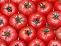 Grad A fresh Vegetable tomatoes