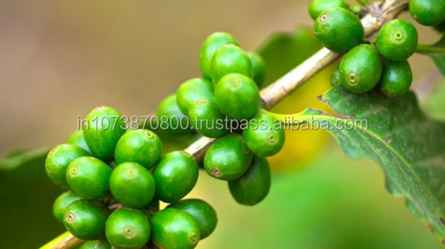 vietnam Best premium Coffee Beans to sale