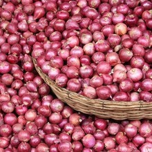 Fresh Red Onion for Singapore market