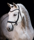 Horse Equipment Custom Fancy Horse Bridles for Multi-size Horse