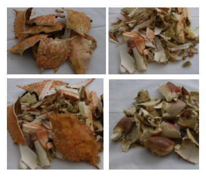 Dried Crab Shell for chittin