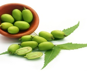 Neem Seed For Sale/Azadirachta indica extract from neem tree seeds