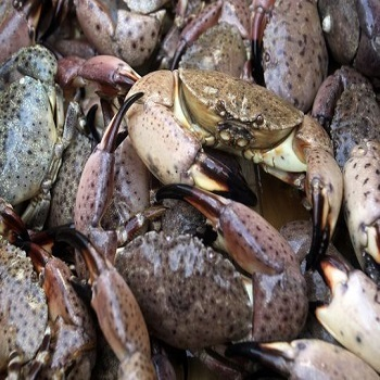 how to prepare frozen stone crab claws