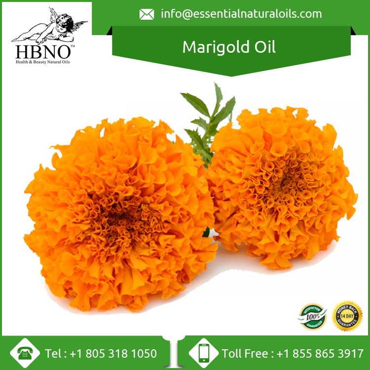 100% Pure Organic Marigold Essential Oil / Marigold Oil