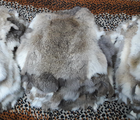 Dressed rabbit pelt