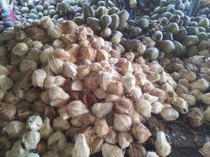 Coconut Export To Dubai, Coconut Export To Dubai Suppliers