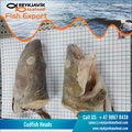 Cod Fish / Gadus Morhua Head for Bulk Export