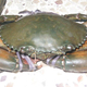 High Quality Soft Shell Crab / Live Mud Crab For Sale