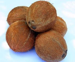 Best Quality Fresh Semi Husked Matured Coconut