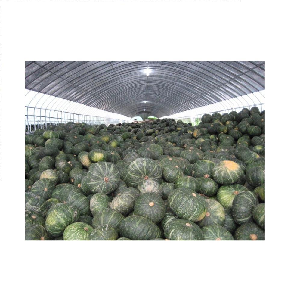 Japan fresh pumpkin fruit/ vegetable pumpkin