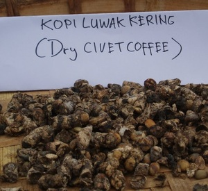 Kopi Luwak Coffee Beans - 100% Wild Kopi Luwak Coffee Beans Wholesale