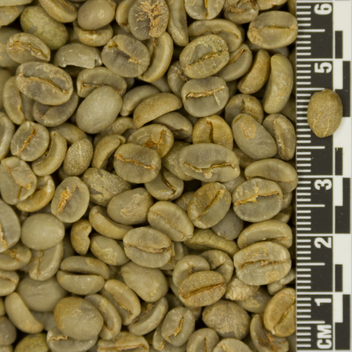 Wholesale high quality robusta and arabica coffee beans Vietnam