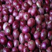 Fresh Onion /round onion professional export: Philippines for sale
