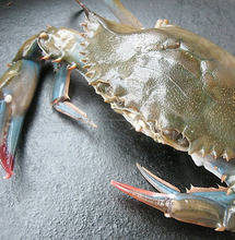 Live Mud Crab, Soft Shell Mud Crab, Frozen Crab,