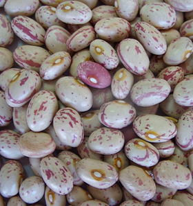 America Round Light Speckled Kidney Bean Red Kidney Beans Import