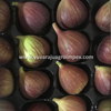 /product-detail/fresh-fig-supplier-in-india-50021635312.html