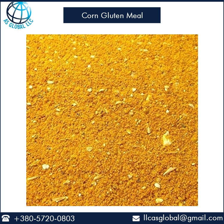 Leading Exporter of Corn Gluten Meal