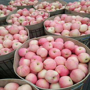Exporter Fresh Red Fuji Apple Fruits Natural....