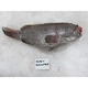 Fresh Grey Grouper Fish - Frozen Grey Grouper - Grey Grouper Fillet (Seafood)