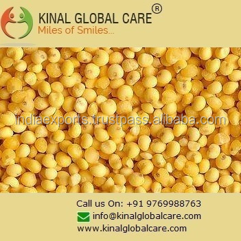 Top Quality Yellow Millet From India