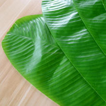Banana Leaf  very  Low Price