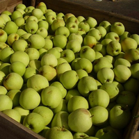 South Africa Fuji Apple Price On Sale Apple Fruit Fresh Fuji for Export